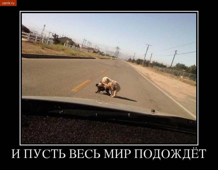 Демотиватор. И пусть весь мир подождет.. Собачки на дороге