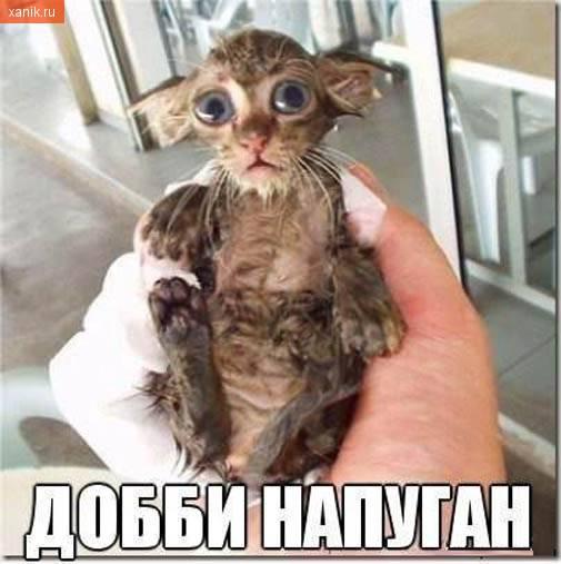 Добби напуган. Мокрый котик с большими глазами