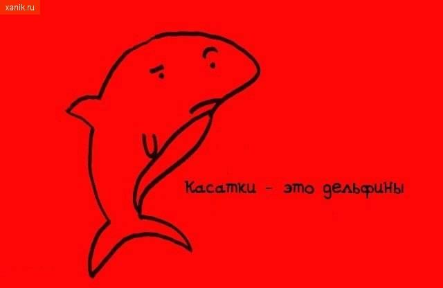 Касатки - это дельфины