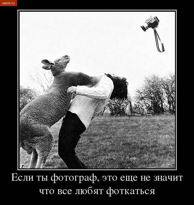 Демотиватор с кенгуру. Если ты фотограф, это еще не значит, что все любят фоткаться