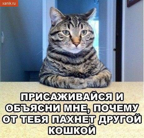 Присаживайся и объясни, почему от тебя пахнет другой кошкой